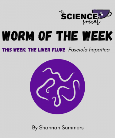 fasciola hepatica worm of the week